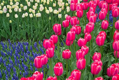Spring in the Capital Region
