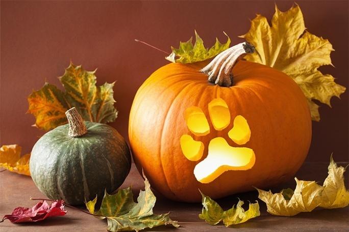 Siena_Pumpkin-1.jpg