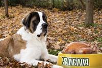 Thanksgiving_Siena-Preview.jpg